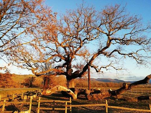 荘厳な雰囲気を持つ木。そして、太陽のあたり具合によってまた色が変わる。