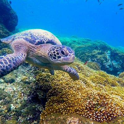 Cuando veas y explores disfrutaras lo bellos que es la vida en este mundo bajo el agua.