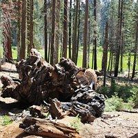 Chimney Tree trail