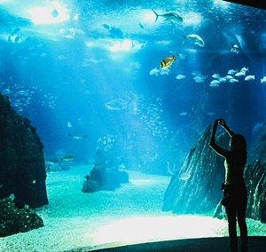 El Oceanario es el gran acuario de Lisboa y una de las atracciones más visitadas de la capital portuguesa