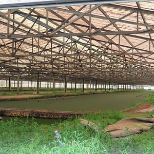 The Aquatic Greenhouse