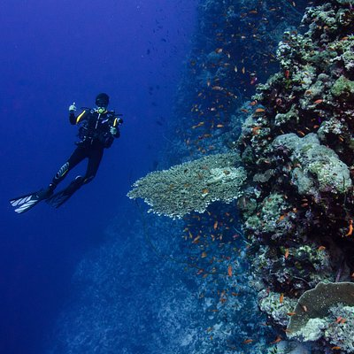 Buceo Mar Rojo - Gus Dive Center