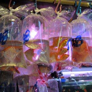 Goldfish for sale!!