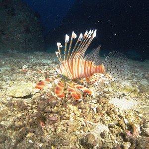 dive site south of bentota