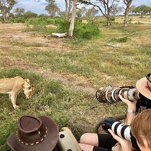 BIG CAT PRIVATE PHOTOGRAPHIC SAFARIS