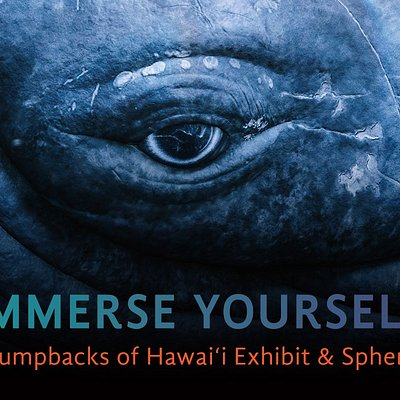 NEW Humpbacks of Hawaii Exhibit & Sphere