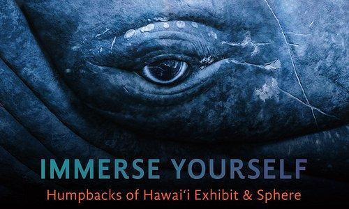 NEW Humpbacks of Hawaii Exhibit & Sphere