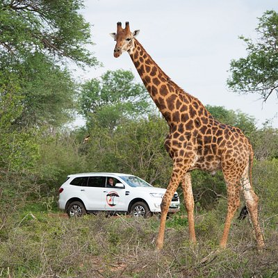 Enjoy a safari with Twiga Travel.