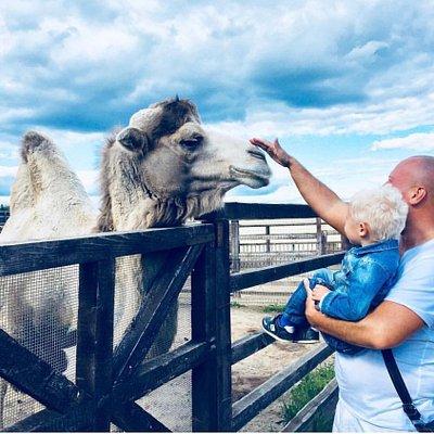 В этом зоопарке можно кормить животных и гладить)