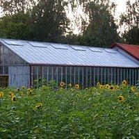 Ett av växthusen uppe vid Rås Gård