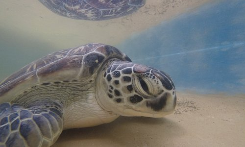 Captured moment from our Turtle Rehabilitation Centre