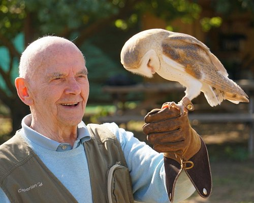 Photo of Bird of Prey Experience by Skywings Falconry