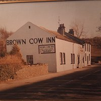 Classic brown cow