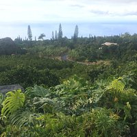This is your view while sitting out on the lanai having a cup of coffee at Heavenly Hawaiian Coffee.
