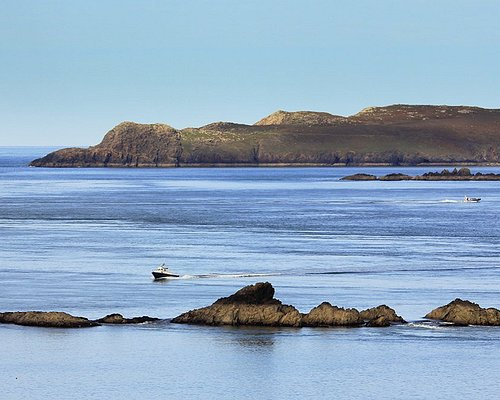 Daily ferry boat to Ramey Island RSPB Nature Reserve and offshore Whale and Dolphin trips