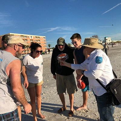 Expert tour guide shows and tells you about our local shells. You'll also learn about seabirds and sea turtles that nest on our beaches!