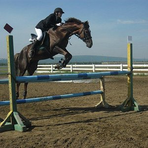 jumping competition