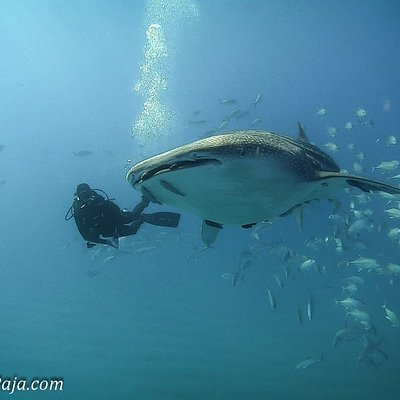 amazing encounter with a whale shark