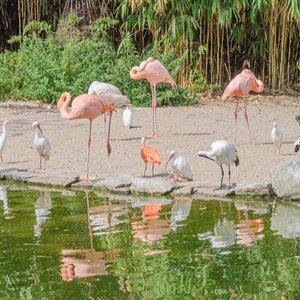 Flamingi i ibisy pod wolierą w Grugaparku