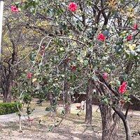 Flowers at Hibiscus Garden