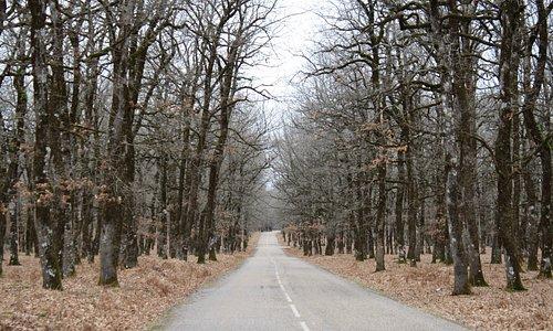 Ο δρόμος που διασχίζει το Δάσος της Φολόης.