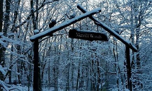 See the Park in it's snowy blanket