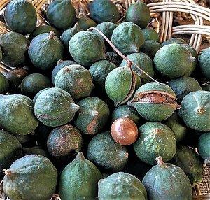 En la Ecoferia de La Reina, en Santiago de Chile, se encuentran preciosas rarezas como esta: macadamias de Alto del Carmen, provenientes del norte del país.