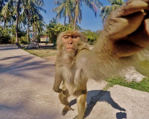 Monkey selfie moment. :) A monkey reaching for a piece of fruit I put on my GoPro camera produced this funny photo in Vietnam. :)
