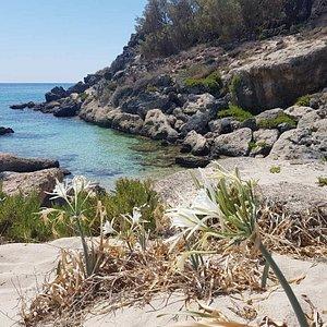 Flora of Elafonissi island!