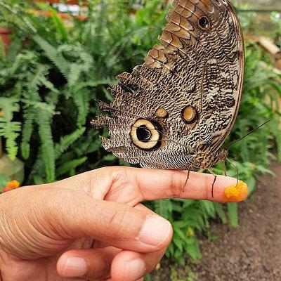 Een klein, maar zeer bijzondere vlindertuin @Mariposario Mindo, waar  je de vlinders zelfs kan & mag voeren.