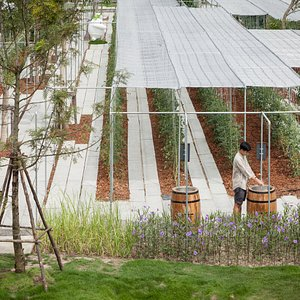 """""""CORO Garden""""  An area where you will experience Grow and Harvest first-hand!"""