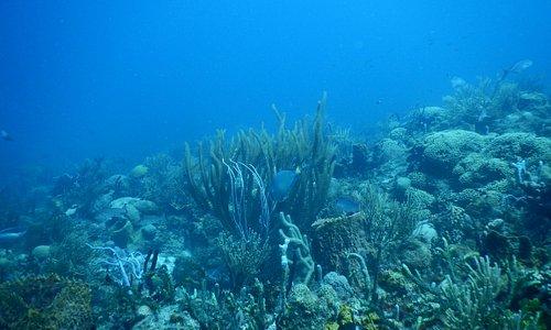 Devils Table reef
