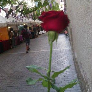 Rosa en allada