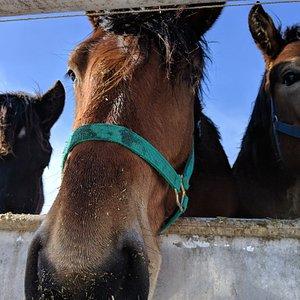 ばんえい牧場とかちの大きくて優しい馬たち