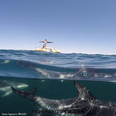Lo que esa delgada línea de mar esconde....fabulosos delfines oscuros! Golfo Nuevo, Puerto Madryn, Chubut, Patagonia, Argentina!