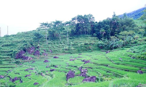 Rice Field From Don Village