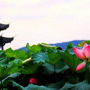 West Lake Jixian Pavilion
