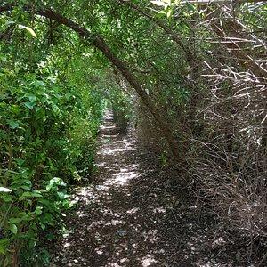 המנהרה כניסה למבוך