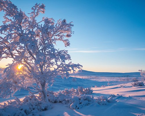 The sun rise after the polar night.