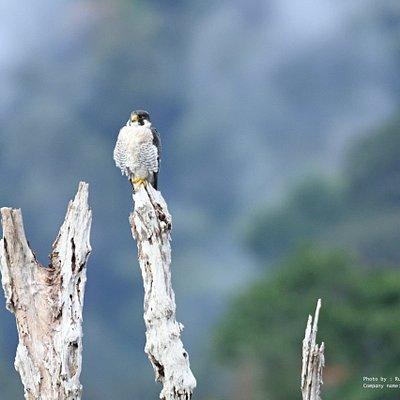 Bird watching at Cheaw Larn Lake