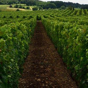 Vignes de Parnay