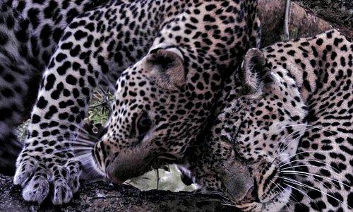 Piece of Uganda Safaris