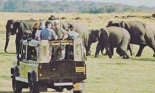 airport pick and drop|whale watching |safari|traditional dancing |shopping|jewelry shopping |fantastic tours through Sri Lanka watsapp +94775029290 📲📲📲 #travel #vacation #holiday #backpacker #jewelry #green #srilanka #beach #fishing #hiking #safari  #wildlife #travel_drops #islandlife #travelgoals #in