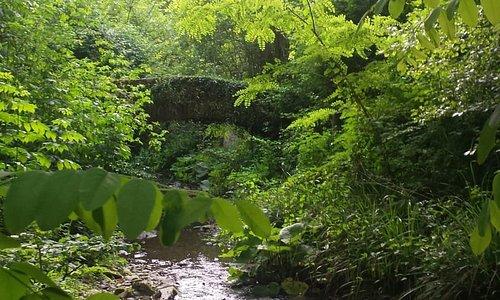 Ponte sul Bettigna