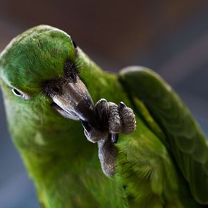 One of our Amazon parrots :)