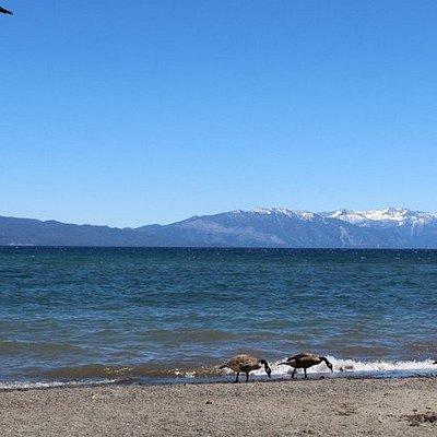 Lake Forest Beach