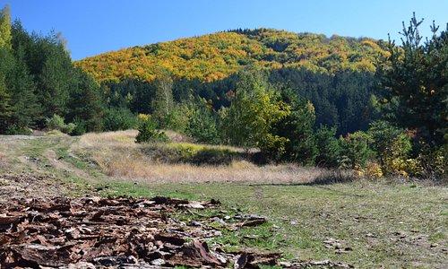 Vitosha, Kladnitsa in late autumn.