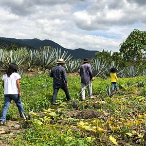 A stroll amongst the wild agave fields in Sola de Vega during our Mezcal Immersion experience with Sósima Aguilar and Fanekantsini Cooperative. Photo: Michelle Schilling