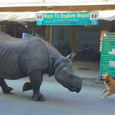 symbiotic relationship between rhino and dog....