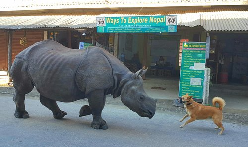 symbiotic relationship between rhino and dog....